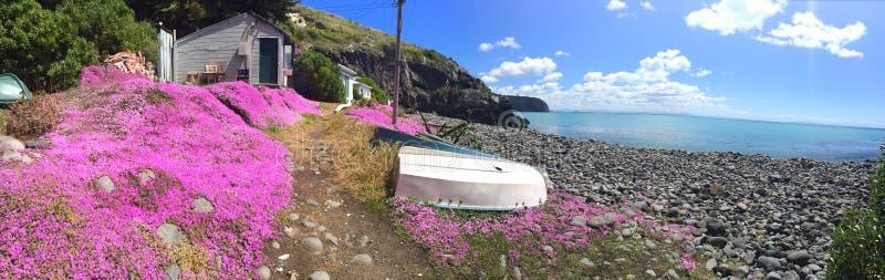 在磐石湾,克赖斯特切奇,新西兰的桃红色花 库存图片