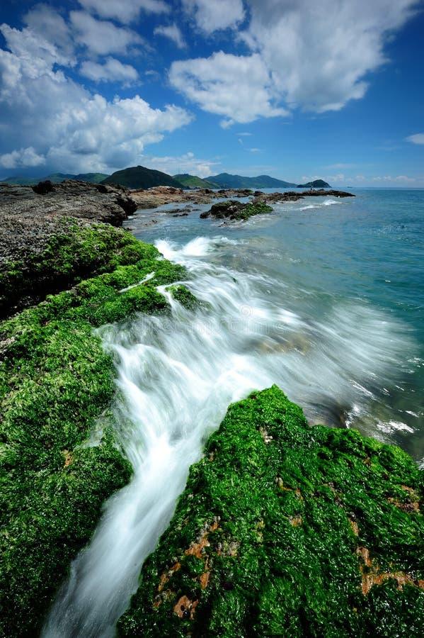 在礁石的海草 免版税库存照片
