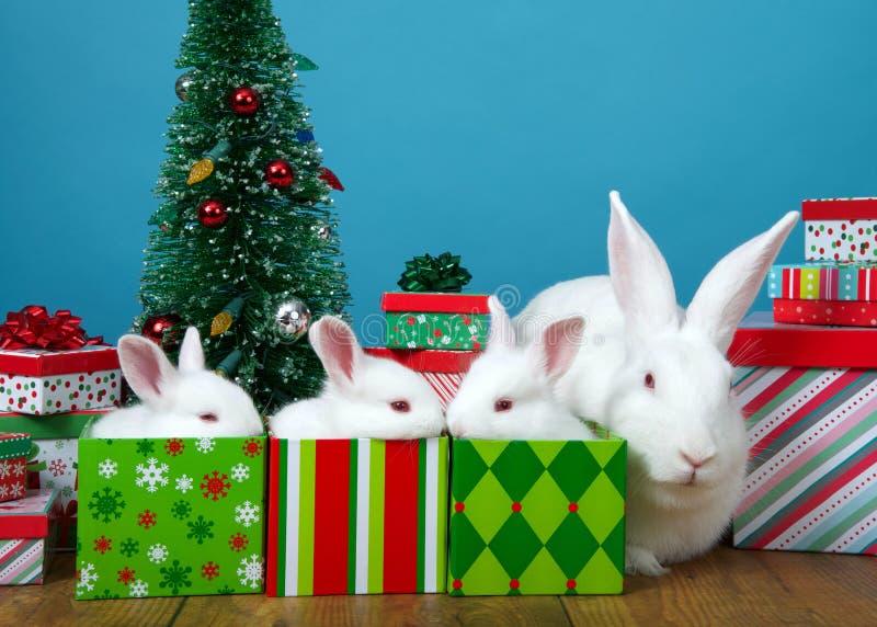 在礼物的婴孩兔宝宝与坐的妈妈近 免版税库存图片