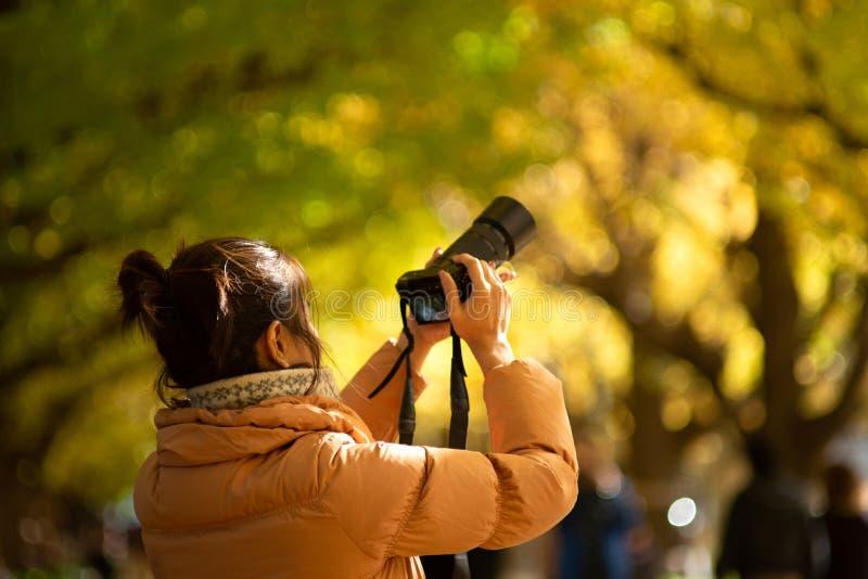 在神功皇后的秋天颜色Gaien银杏树大道的 库存图片