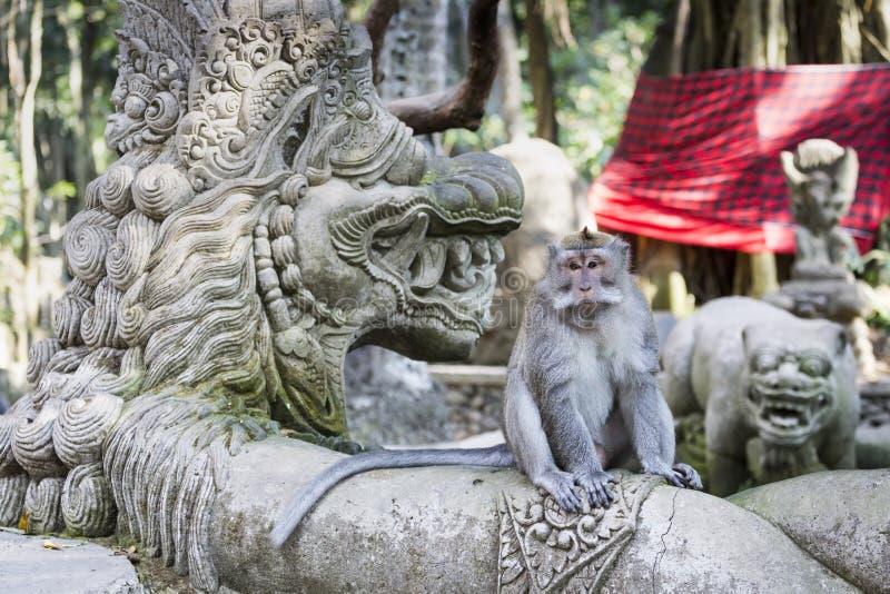 在神圣的猴子森林, Ubud,巴厘岛,印度尼西亚的猴子 免版税库存图片