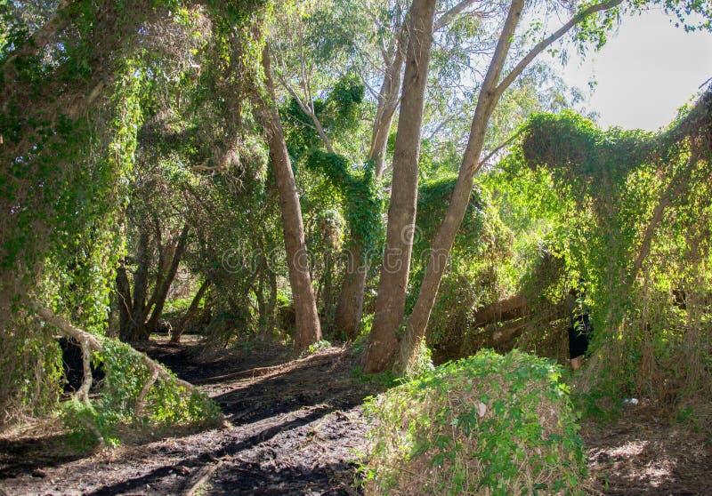 在神秘园的足迹 免版税库存图片