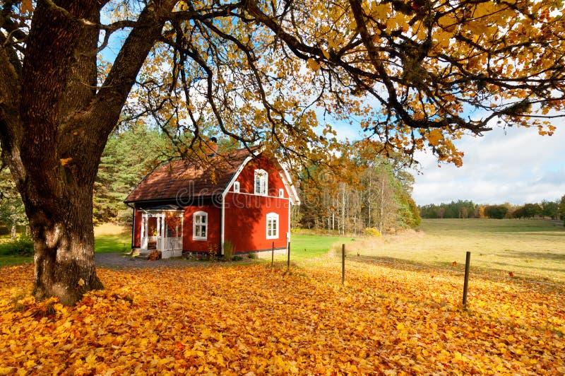 在秋叶之中的红色瑞典房子 免版税库存照片