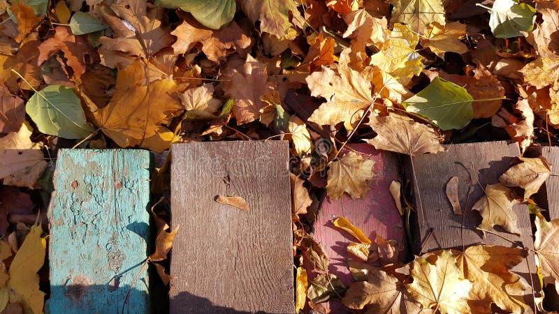 在秋叶地毯中的困厄的木板条 免版税库存图片