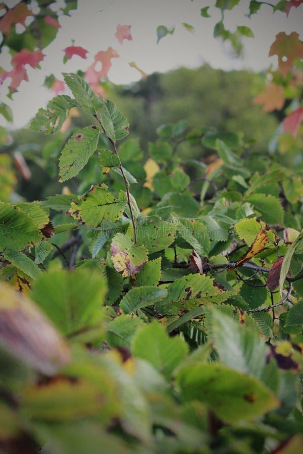 在秋天前的绿叶 免版税图库摄影