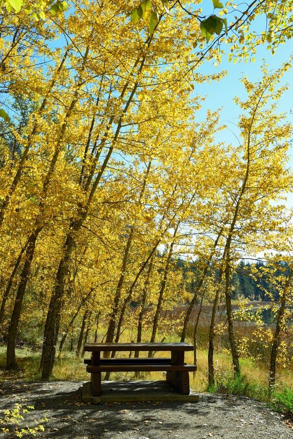 Download 在秋天叶子下的野餐桌 库存照片. 图片 包括有 秋天, 季节性, 沉寂, 季节, 公园, 森林, 露营地 - 62525144