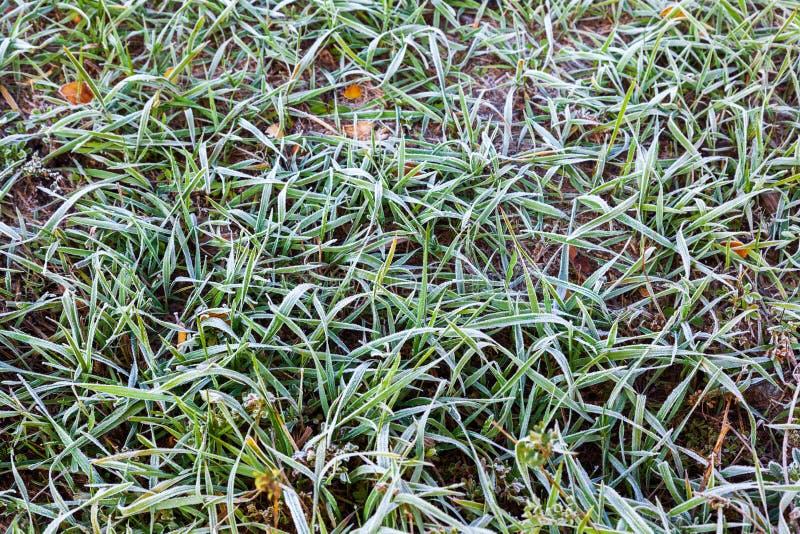 在秋天叶子和秋天草背景的冬天霜 图库摄影