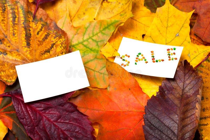 在秋天多色叶子背景的两价标 免版税库存照片
