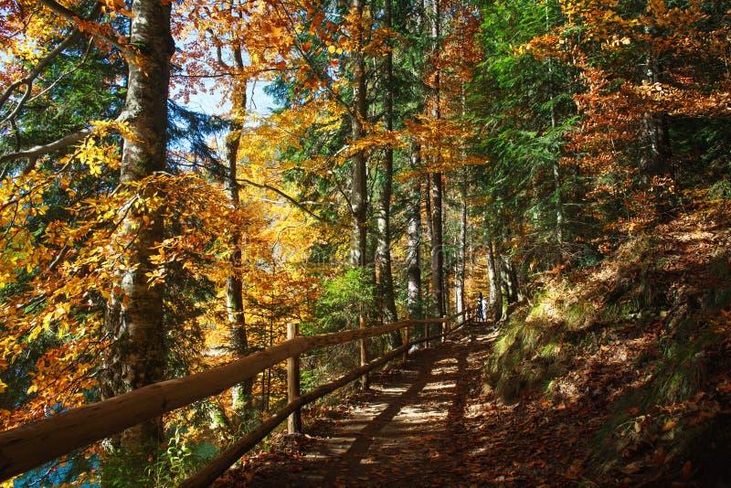 在秋天太阳的具球果落叶森林公园落后道路 库存图片