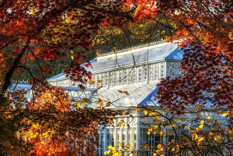 在秋天季节期间的Daeonsil 免版税库存照片