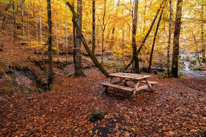 在秋天季节的下落的叶子 库存照片