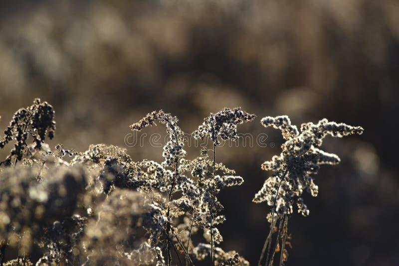 在秋天季节的干领域花在日落 图库摄影