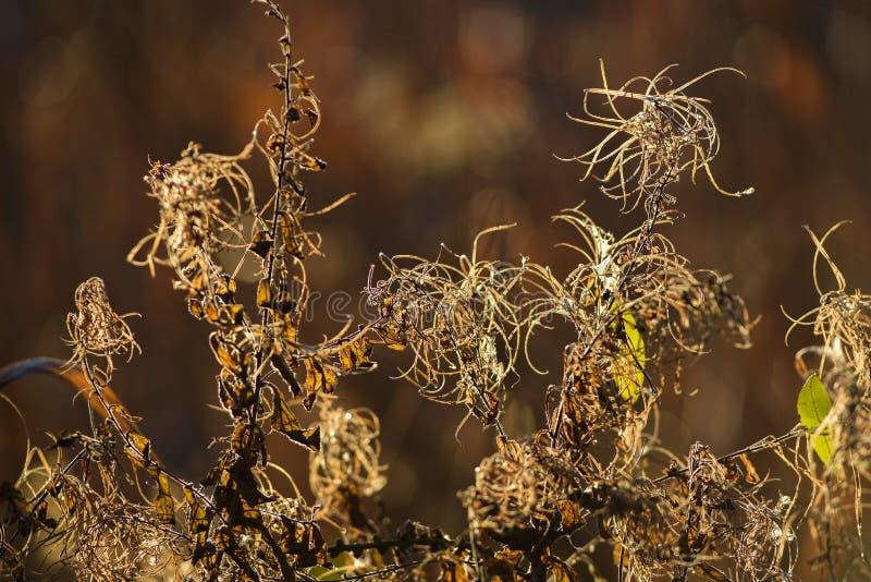 在秋天季节的干领域花在日落 免版税图库摄影
