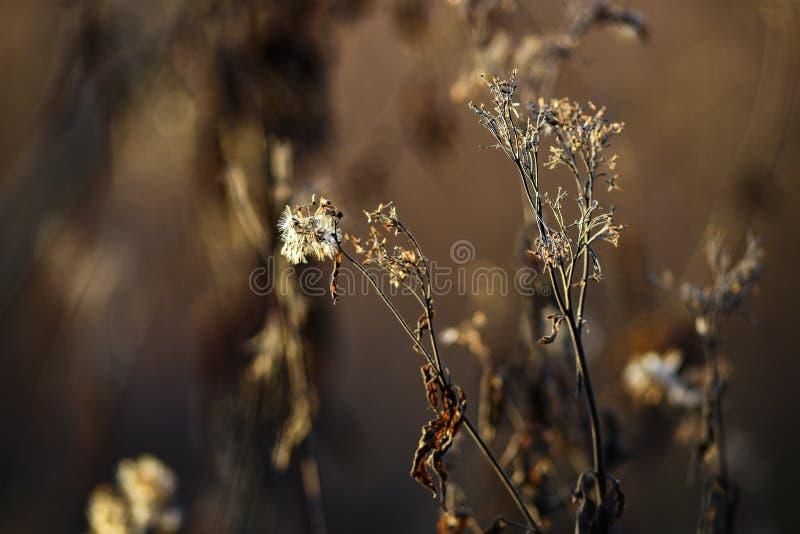 在秋天季节的干领域花在日落 库存图片