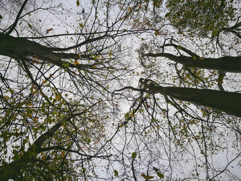 在秋天季节的森林高度 库存图片