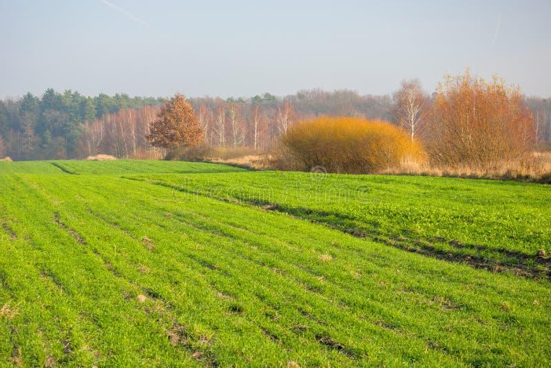 在秋天季节的绿色领域 库存图片