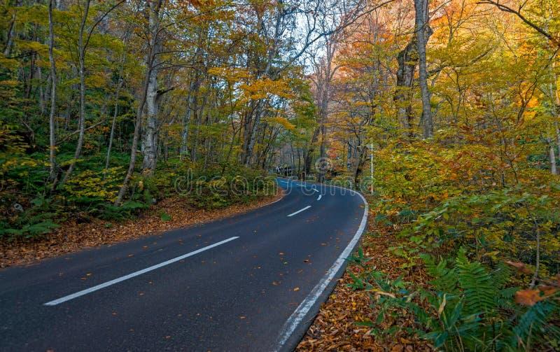 在秋天季节的Oirase小河 免版税图库摄影