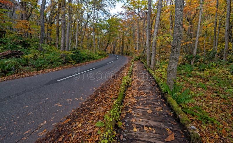 在秋天季节的Oirase小河 免版税库存照片