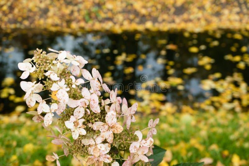 在秋天小河背景的美丽的花  图库摄影
