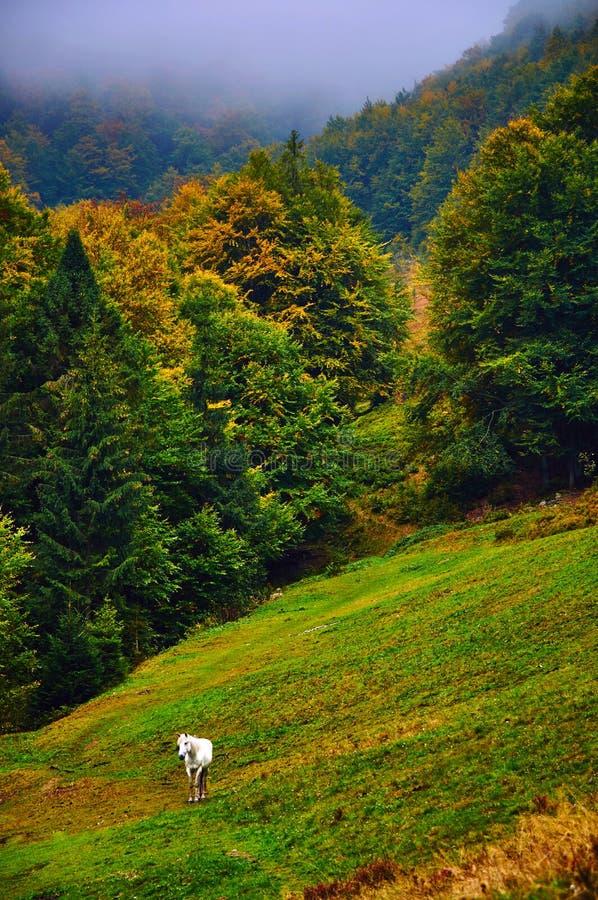 在秋天山小山的白马 免版税库存照片