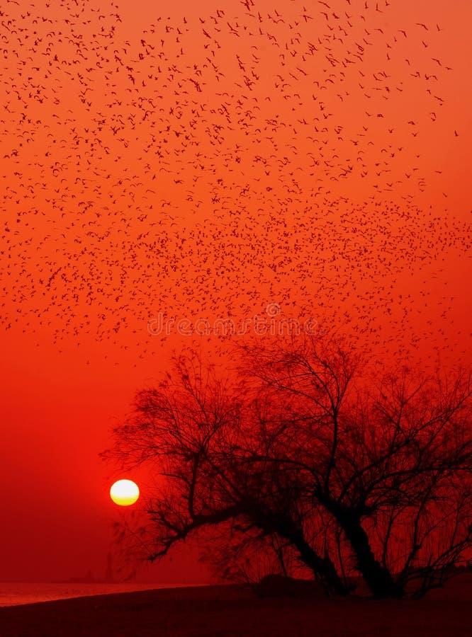 在秋天微明下,数千鸟飞行 免版税图库摄影