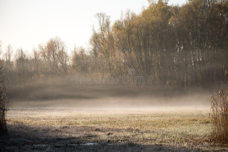 在秋天日出的薄雾 库存照片