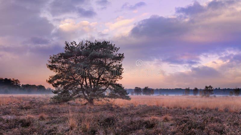 在秋天日落的树与在欧石南丛生的荒野,Goirle,荷兰的剧烈的天空 免版税库存图片