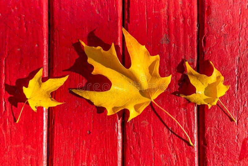在秋天期间的三片金黄叶子在红色木表上 免版税库存图片