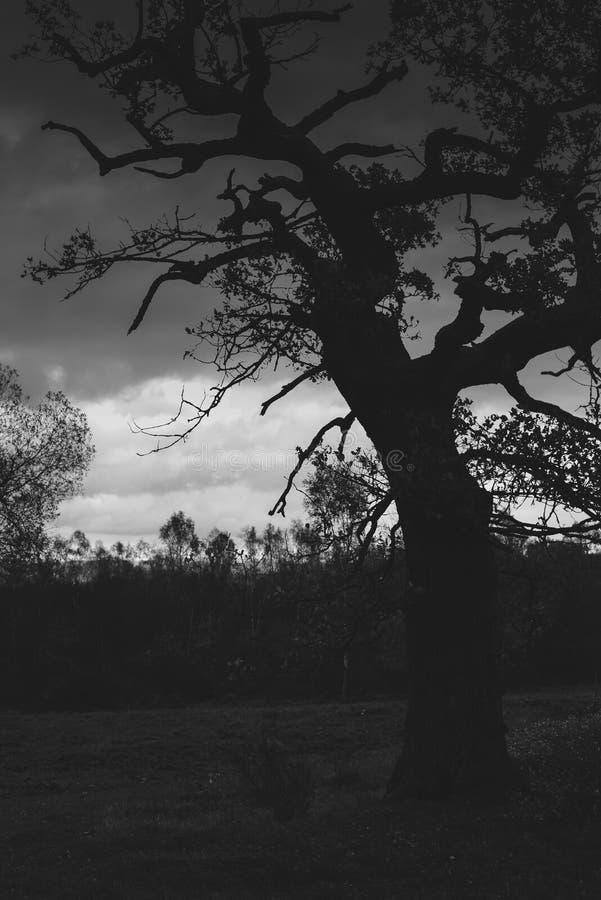 在秋天期间的老橡树 免版税库存照片