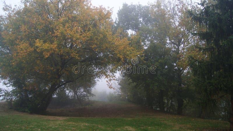 在秋天期间,在树之间的美丽的足迹在一个有雾的森林里挖洞 免版税库存照片