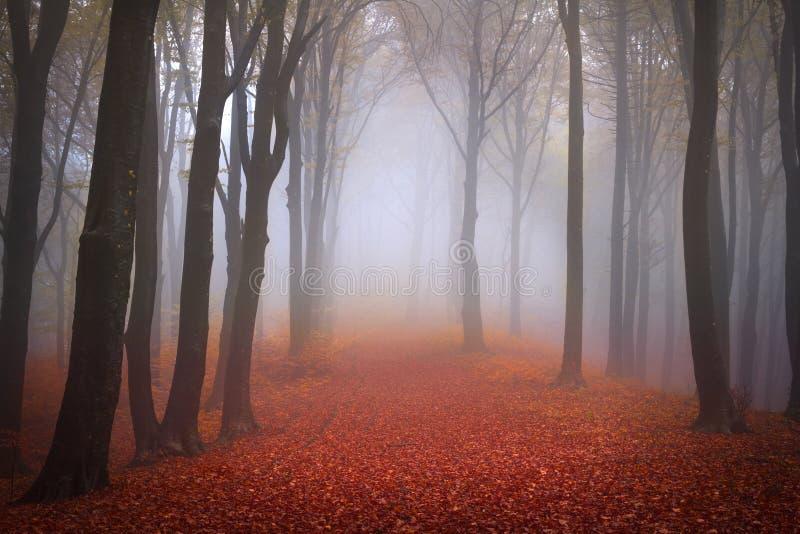 在秋天期间的有雾的森林 免版税库存照片