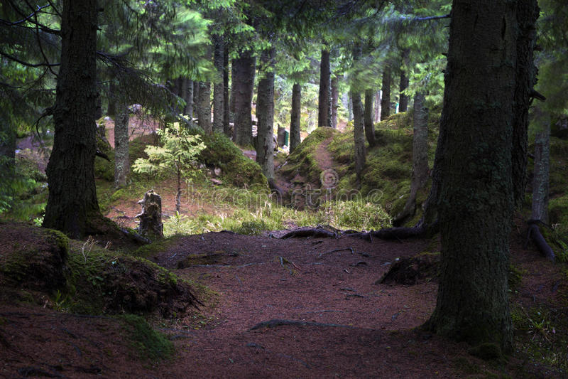 在秋天期间的有雾的森林 库存照片