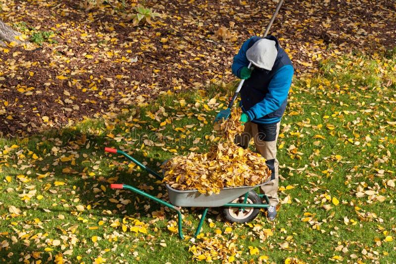 在秋天期间的男性花匠 库存照片