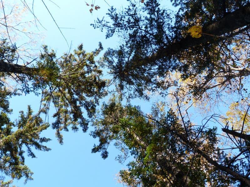 在秋天木头的天空 免版税库存图片