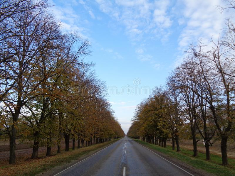 在秋天树中的一条空的路 免版税图库摄影