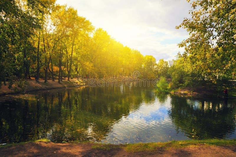在秋天树叶子的太阳在池塘附近的在城市公园 沿岸的鸟游泳和步行 免版税库存图片