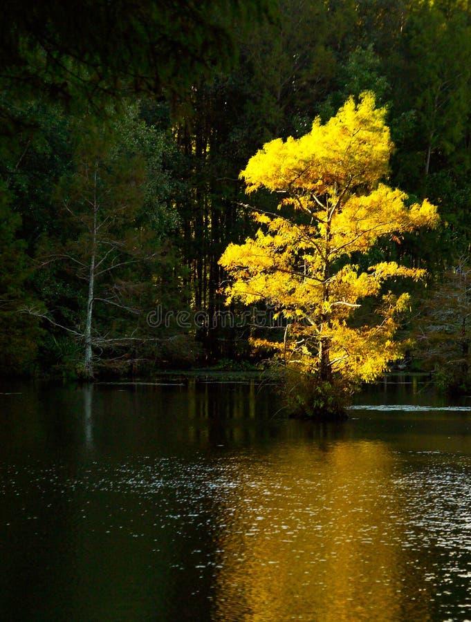 在秋天树的明亮的太阳光在阿肯色 免版税库存照片
