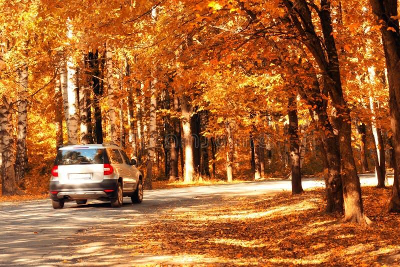 在秋天森林桔子的汽车 免版税库存图片
