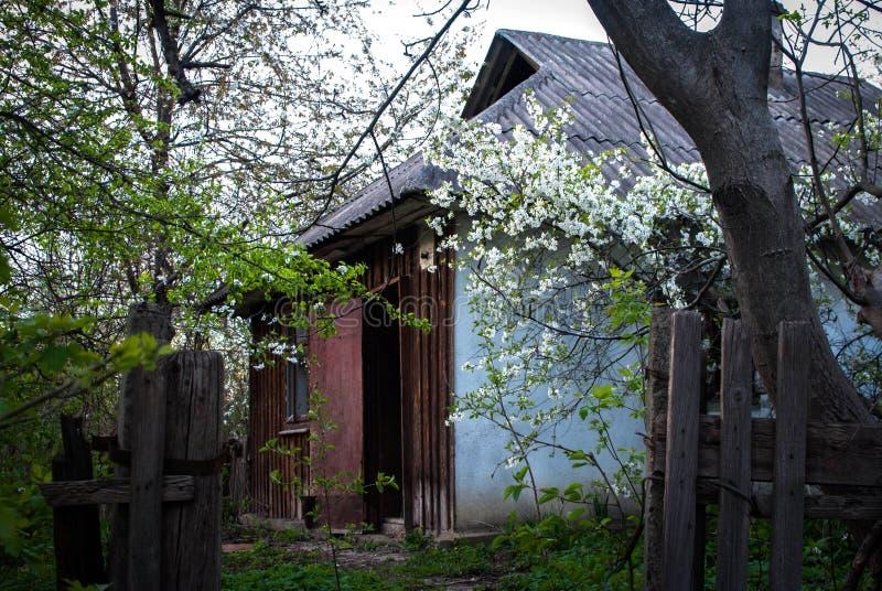 在秋天森林被毁坏的老木小屋废墟的被放弃的狩猎小屋在春天森林,太阳光天 图库摄影