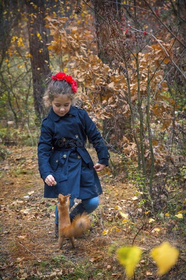 在秋天森林里,女孩喂养与坚果的一只灰鼠 免版税库存图片