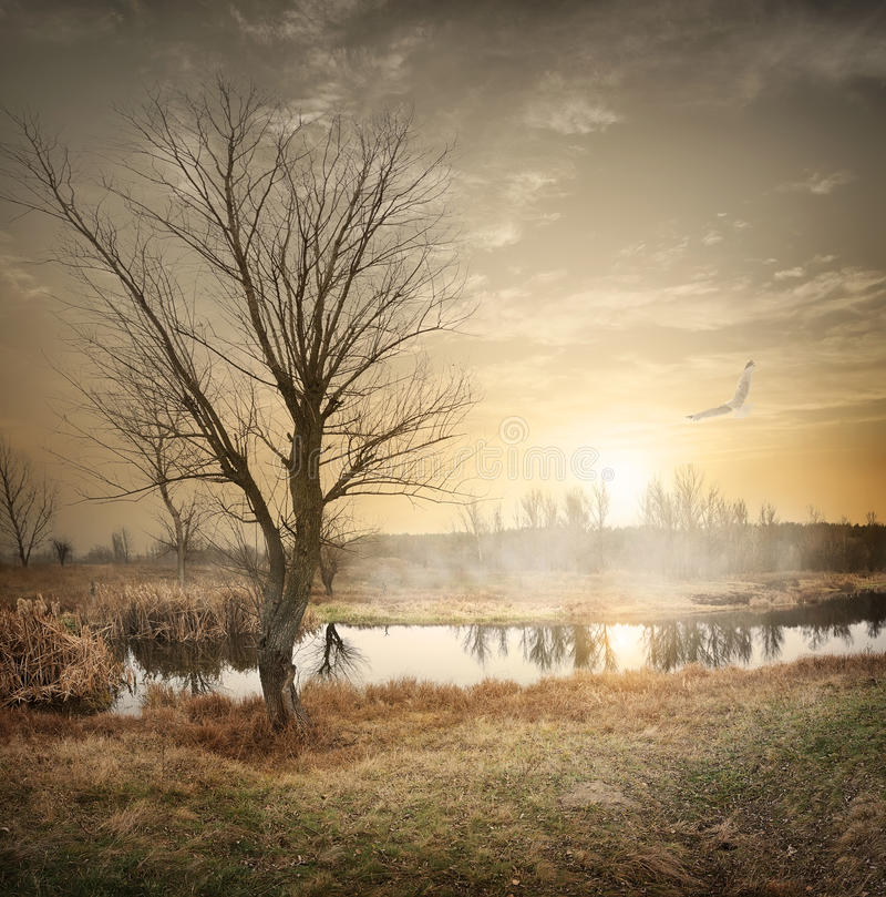 在秋天河的鸟 库存图片