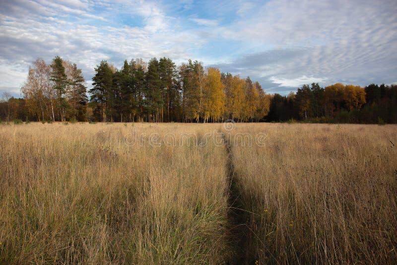 在秋天的俄国风景 免版税库存照片