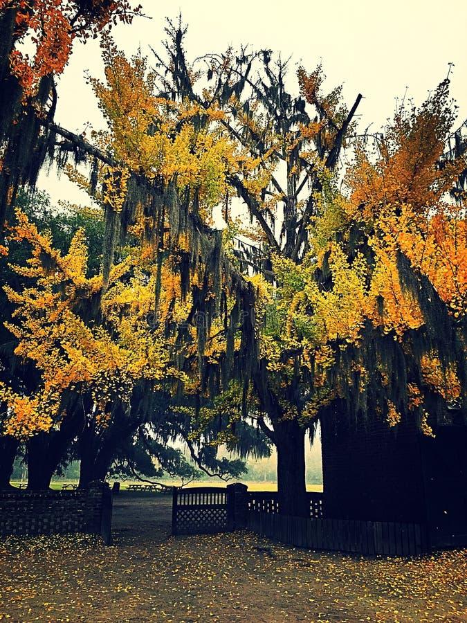在秋天的有雾的天 免版税库存照片
