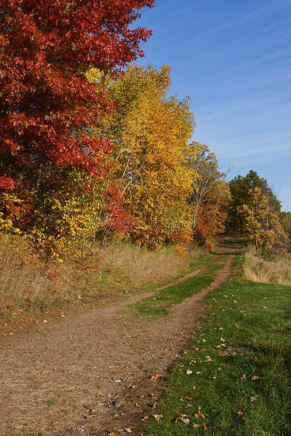 在秋天的森林颜色在hdr 库存照片