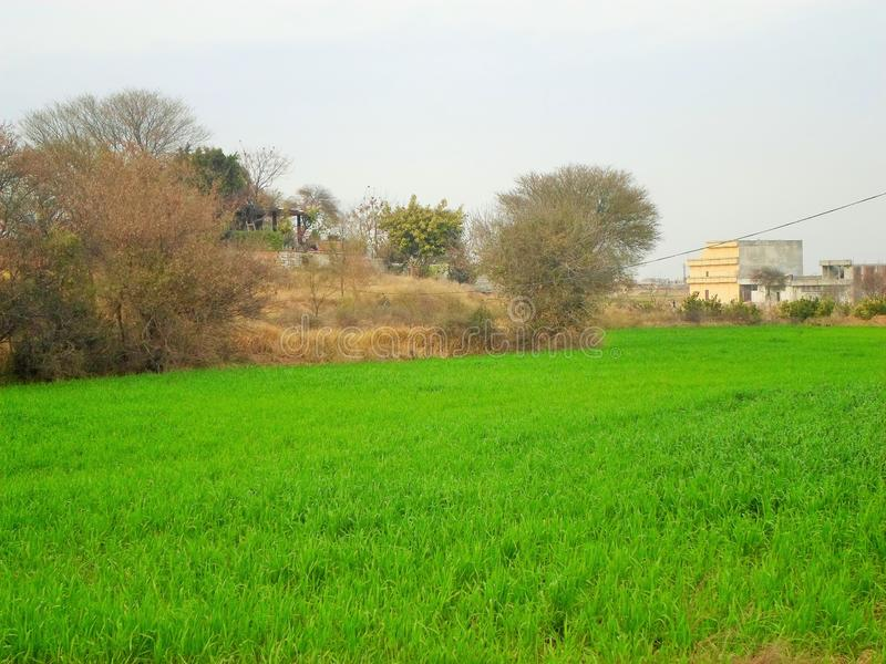 在秋天的绿色新自然草地 库存图片