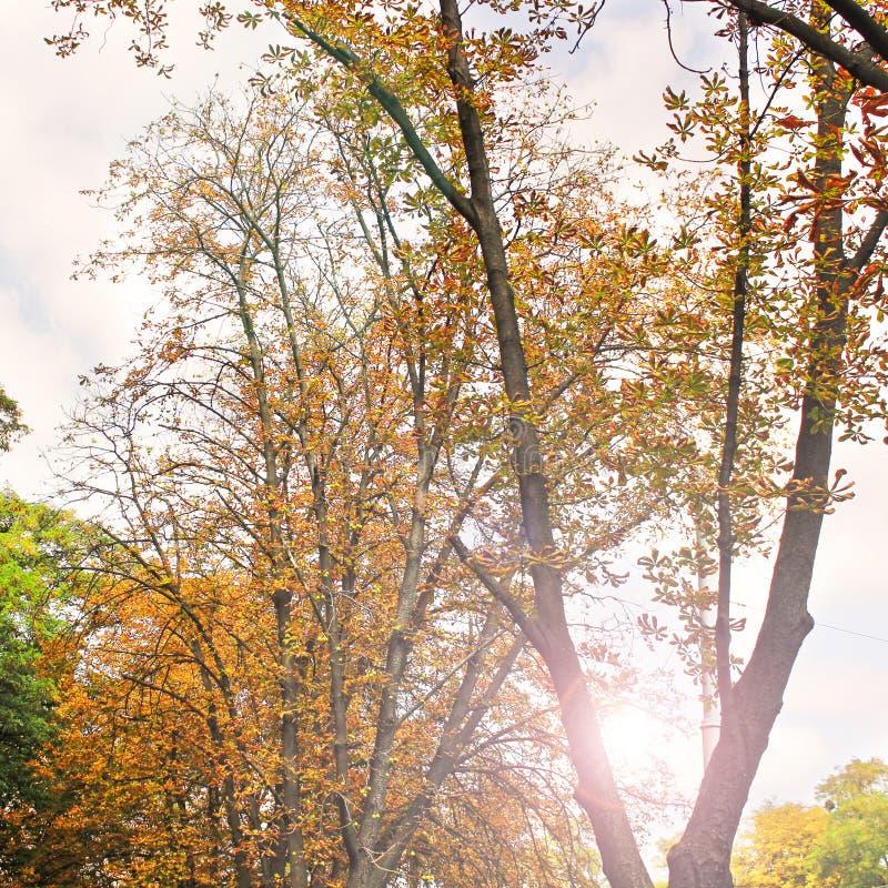 在秋天的美丽的黄色树 免版税库存图片