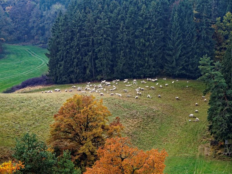 在秋天的自然公园风景在有绵羊的德国的兹瓦本地方阿尔卑斯 免版税库存图片