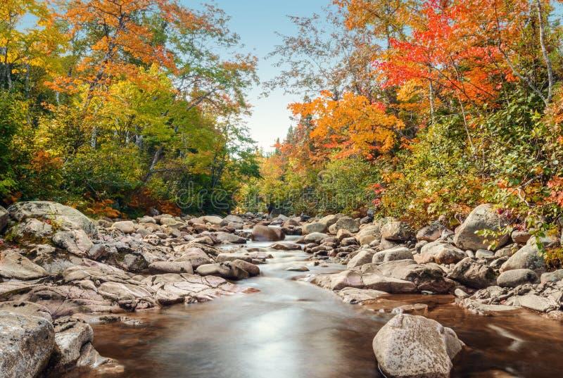 在秋天的Foreat小河 库存照片