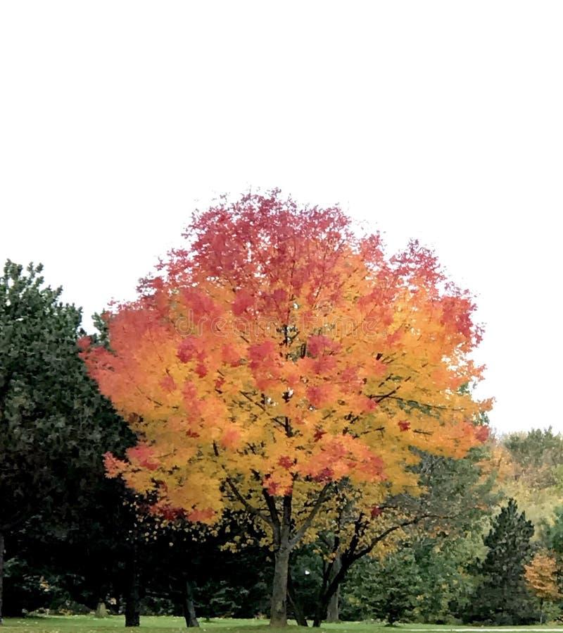 在秋天的UW格林贝 免版税图库摄影