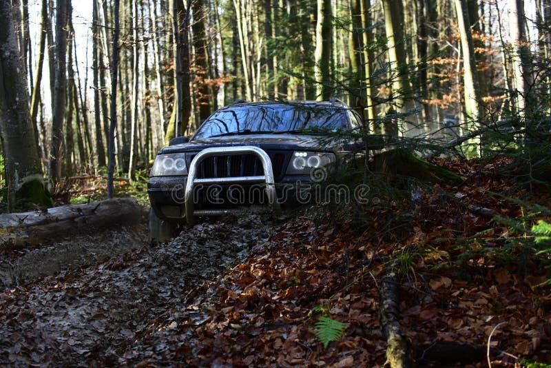 在秋天自然赛跑在秋天森林召集,竞争和四轮驱动的概念的背景马达的越野种族 库存图片